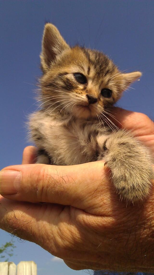 IMAG5174 kitten